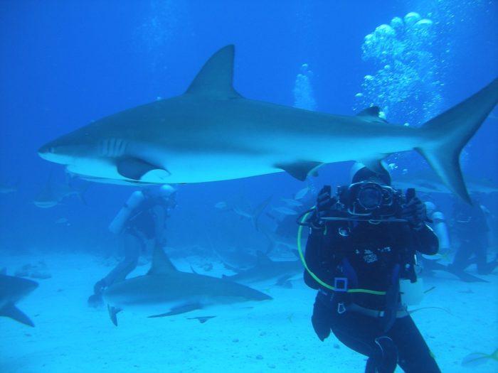 Mergulho com Tubarões nas Bahamas