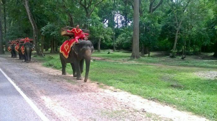 Elefante no Camboja